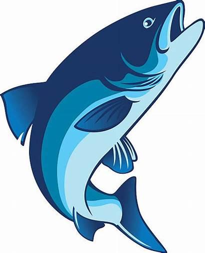 Fish Salmon Clip Clipart Vector Steelhead Trout