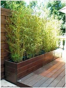 Bambou Pour Haie Brise Vue : emejing haie de jardin en pot pictures design trends ~ Premium-room.com Idées de Décoration