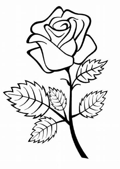 Colorear Flores Dibujo Rosa Imprimir Rosas Pintar