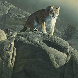 Image Gallery mountain lion art