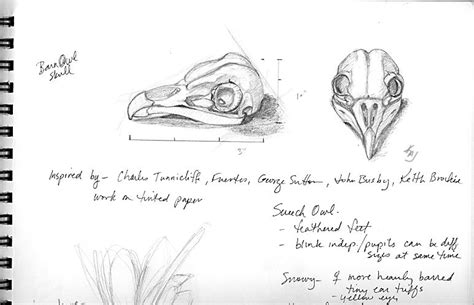 Barn Owl Skull How Draw Birds