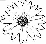Coloring Daisy Flower sketch template