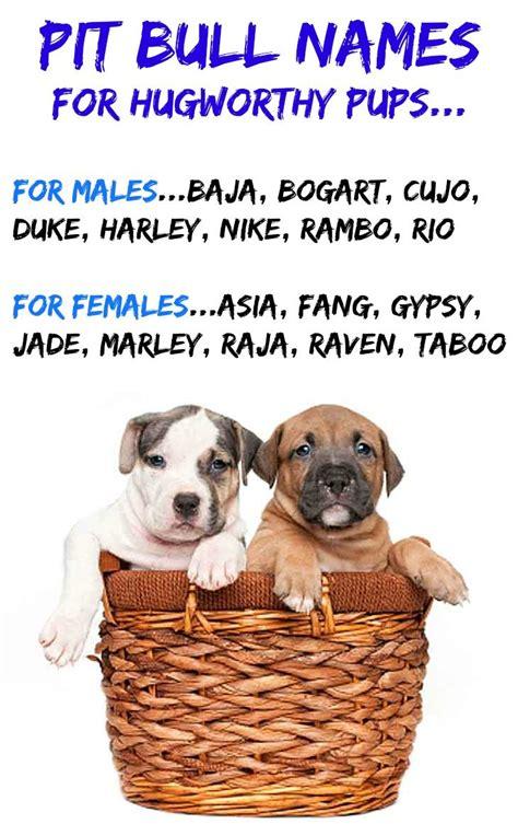 pit bull names  male  female pitbull names pit