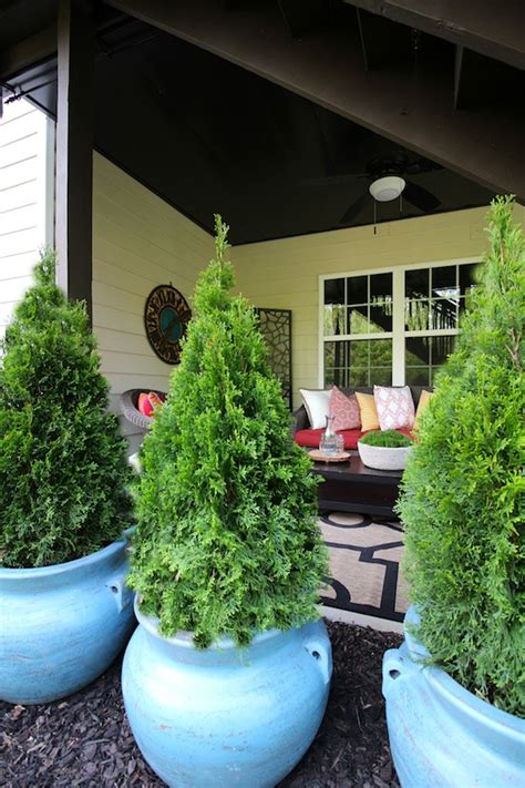potted trees for patio container gardening ideas for a patio upgrade 4373