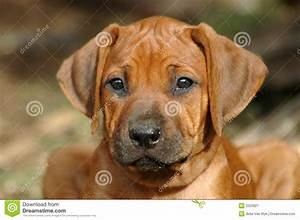stock image puppy face image