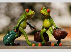 Frogs Funny Travel · Free photo on Pixabay