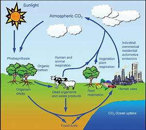 Figure 1 From Anthropogenic Chemical Carbon Cycle For A