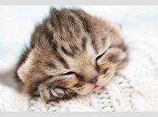 Schlafenden BabyKätzchen — Stockfoto © Andrey_Kuzmin