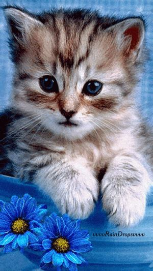 sweet animated kitten pictures   images