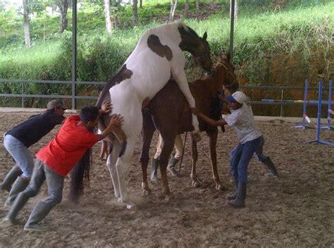 Kuda Ngentot Sama Anjing Manusia Foto Bugil Bokep 2017