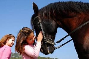 Auto Spiele Für Mädchen : pferde online spiele beliebt bei m dchen ~ Frokenaadalensverden.com Haus und Dekorationen