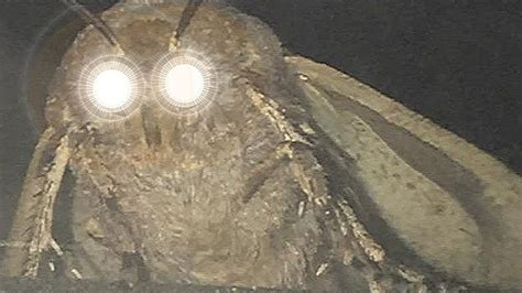 Moth An Lamp Will Always Be Brothers