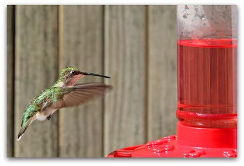 hummingbird feeder tips where are the hummingbirds