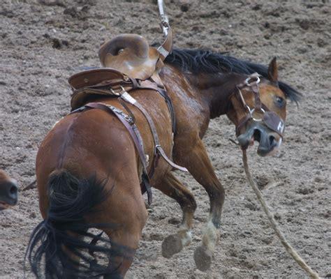 rodeo horse scared cfd dead cheyenne redemption animal tortured bullfighting frontier 2005 days screenshots sharkonline cruelty