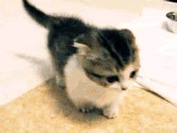 Baby Animals Kitten GIF - Find & Share on GIPHY