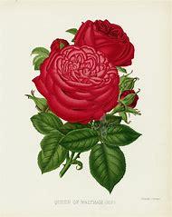 William Paul Rose Garden the 1888