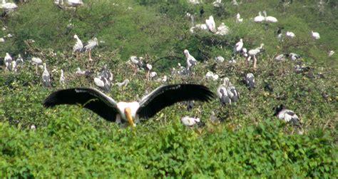 file vedanthangal bird sanctuary jpg wikimedia commons