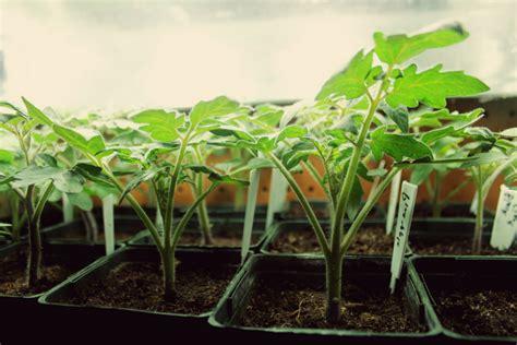 t5 grow lights for indoor plants veggies fruits to grow indoors t5 grow light fixtures