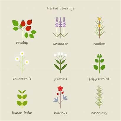 Tea Types Herbs Herbal Drink Jasmine Flower