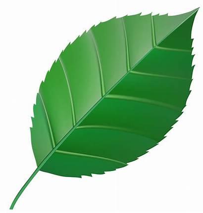 Leaf Transparent Clipart Clip Leaves Hojas Spring