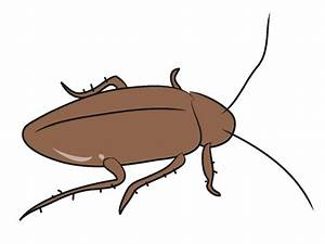 Cockroach Clipart - Cliparts.co