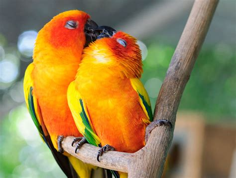 Love Birds Cute Animals
