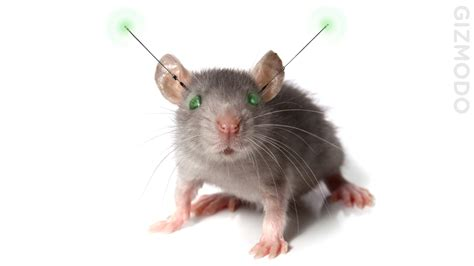 Remote Controlled Mice Today, Remote Controlled Humans