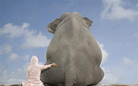 imagen simpatica de  elefante  fondos de