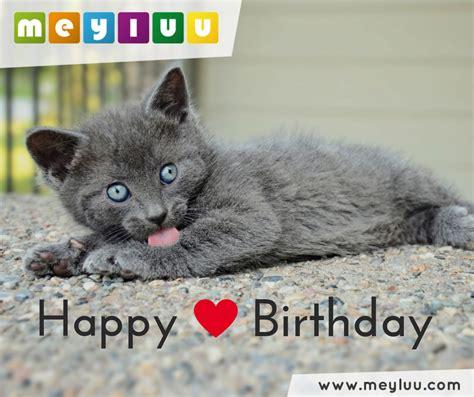 happy birthday tierische geburtstagsgruesse und
