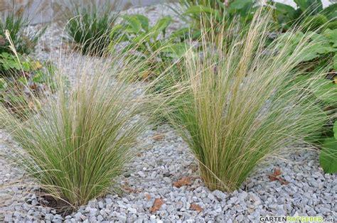 gräser für den garten ziergr 228 ser im garten pflege pflanzen d 252 ngen schnitt