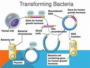 PPT - Genetic Engineering Biotechnology PowerPoint ...