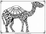Camel Coloring Pages Printable Adult Camels Animals Realistic Clipartmag Downloads Visit Want sketch template