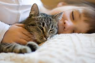 why cats purr uncover the mystery of why cats purr cat behavior
