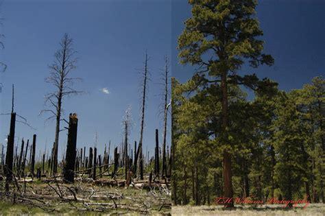 arizona wildfire     flickr photo