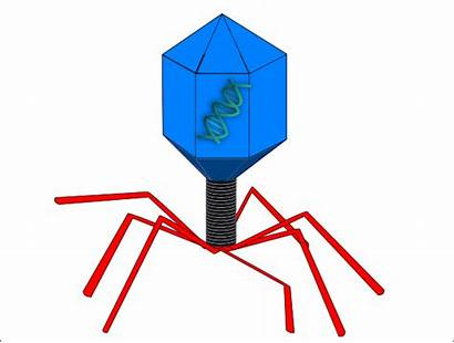 Virus Phage Dna Clip Clipart Clker Domain