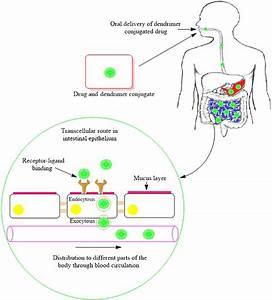 1 Schematics Diagrammatic Uptake Mechanism Of Various Drug