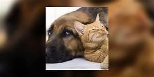 Bicarbonate Contre Les Puces De Chat : puces des chats et des chiens pr vention et traitements contre les puces e e sant ~ Melissatoandfro.com Idées de Décoration