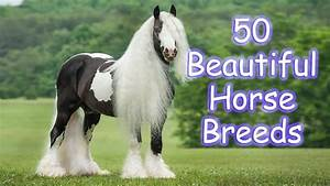 50 most beautiful horse breeds in the world - YouTube