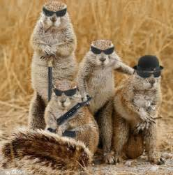 Animal Humor images Mafia wallpaper photos (16476187)