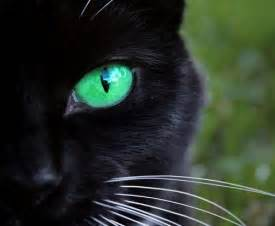 black cats with green baby black cats with green wallpaper