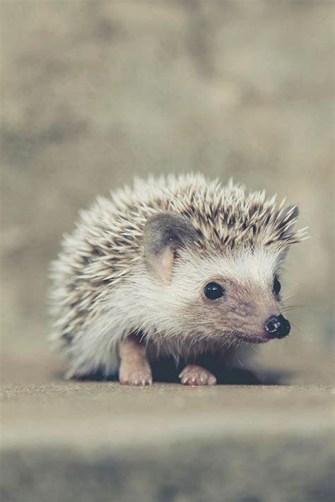 animals images  pinterest animal kingdom