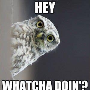 White Owl Meme - best 25 owl meme ideas on pinterest fun meme funny owls and pics of owls