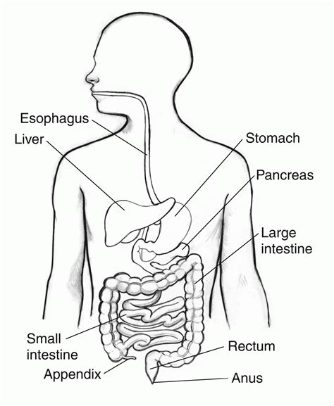 Digestive System Coloring Page Coloring Home