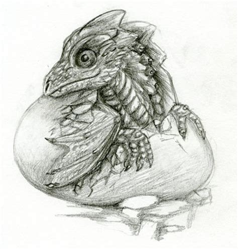 study windstone dragon hatchling  magicallycapricious