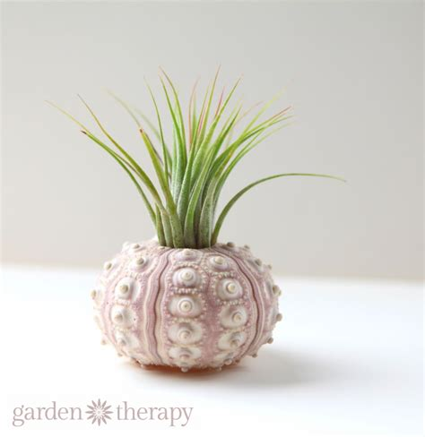 air plants  seashells garden therapy