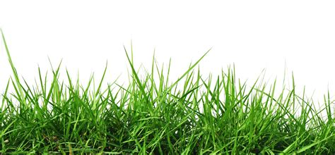 green grass clipart free rumput png free clip free clip on
