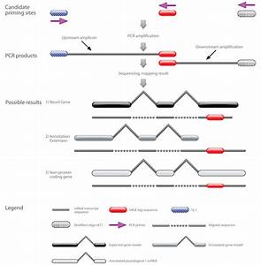 stace experimental procedure template cdna is used in two With pcr template amount