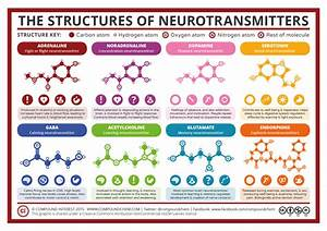 Compound Interest - A Simple Guide to Neurotransmitters