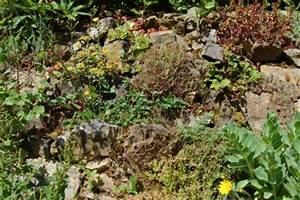 Pflanzen Für Trockenmauer : bund lemgo homepage ~ Orissabook.com Haus und Dekorationen