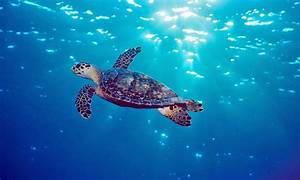 lexis4u: Sea Animals  Aquatic